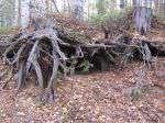 Леса томской обл